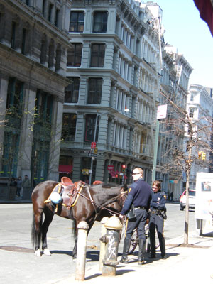 Police horses just off Broadway