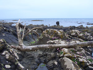 The beach just below Culzean Castle